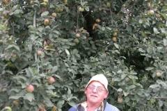 Il proprietario dell'albero secolare di mele campanine a Quistello,da sempre zona di coltivazione vocata