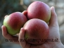 frutta antica
