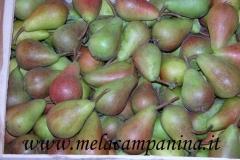Frutto antico originario del Mantovano coltivato nell'Az.Agr.paolo Franzoni