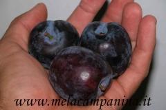 Frutto molto antico coltivato nell'Az.Agr.Paolo Franzoni,dall'ottimo sapore