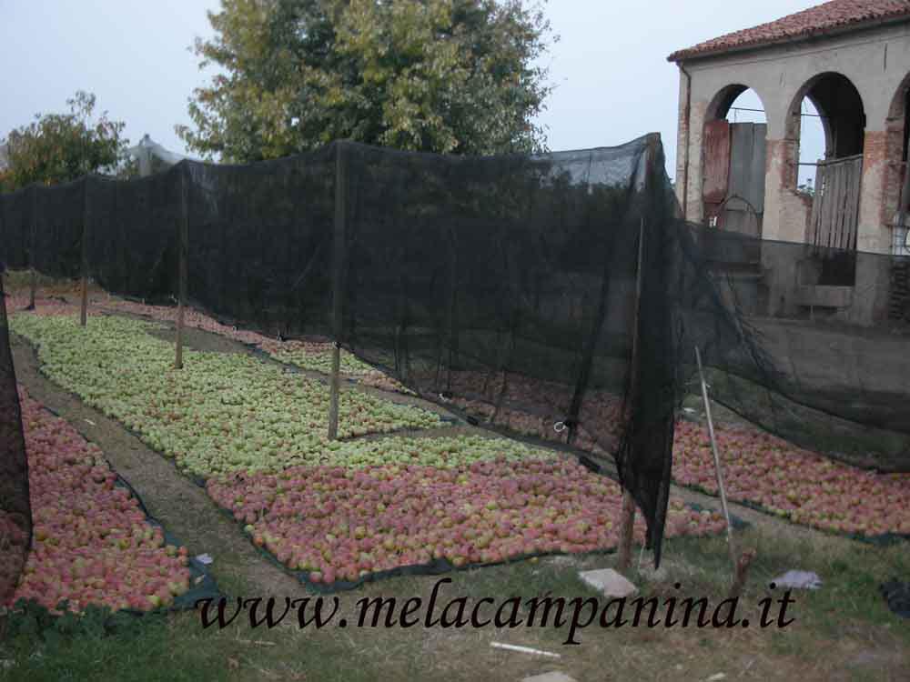 La clinica della bellezza delle mele campanine