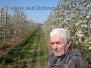 la fioritura delle mele campanine