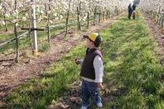 Bambino passeggia tra gli alberi di mele campanine in fiore