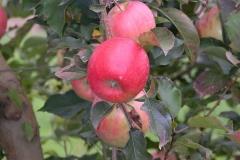Dettagli di mele molto belle