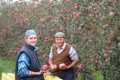 Due operai raccolgono le mele nell'Az.Agr.Paolo Franzoni