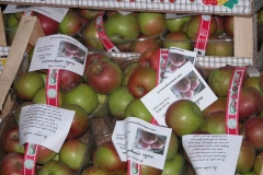 cestini di mele campanine