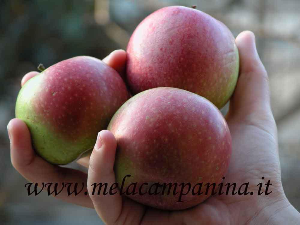 Il sito della mela campanina